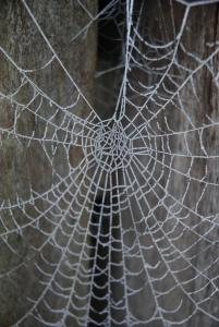 groeiweb