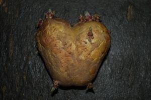 hartpatat